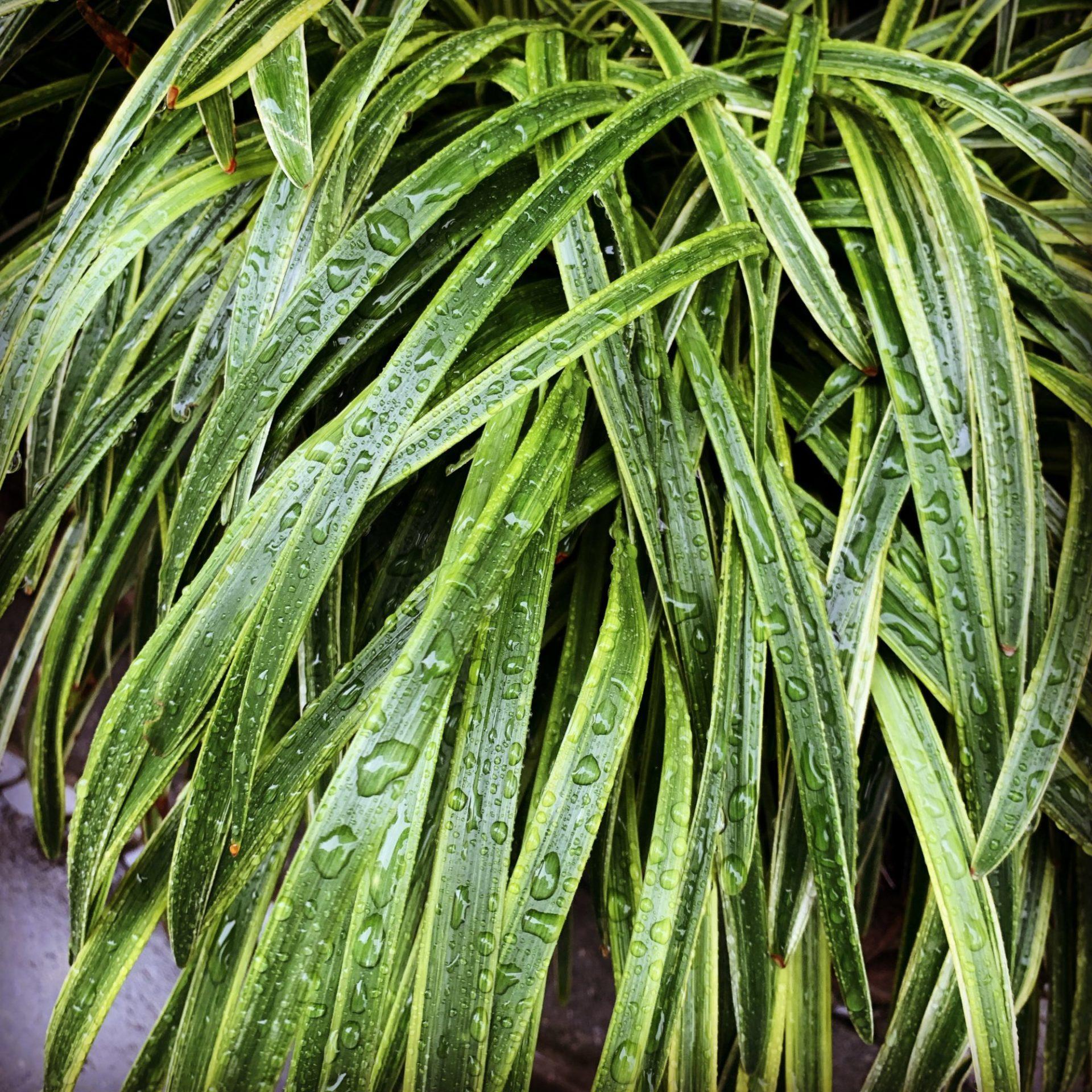 雨に濡れていた葉っぱ